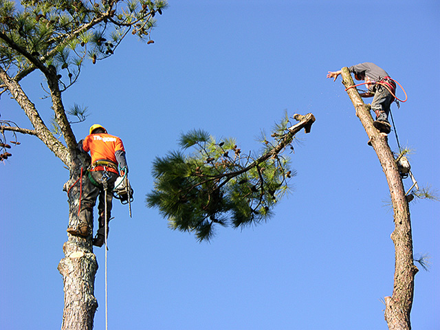 chula vista best tree removal services