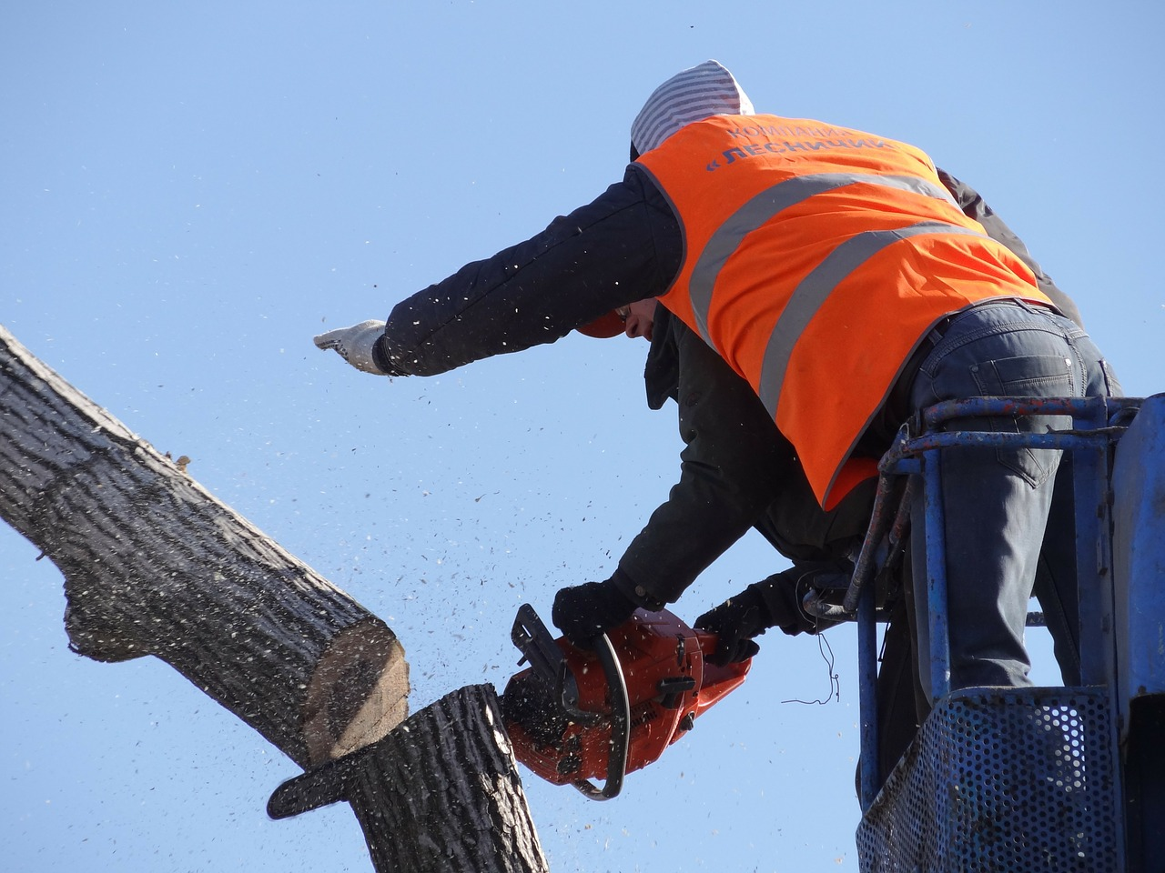 Chula Vista top rated stump grinding services