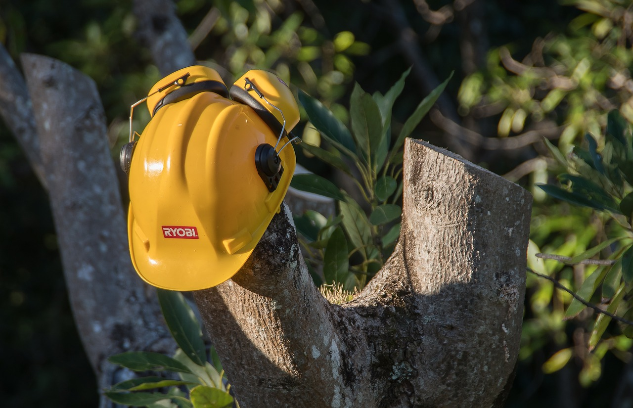 Chula Vista top rated tree care