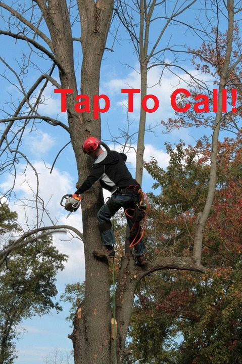 chula vista tree care services