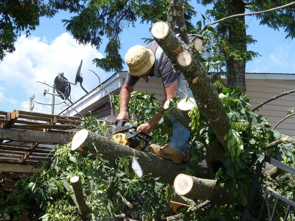 residential tree services Chula Vista California